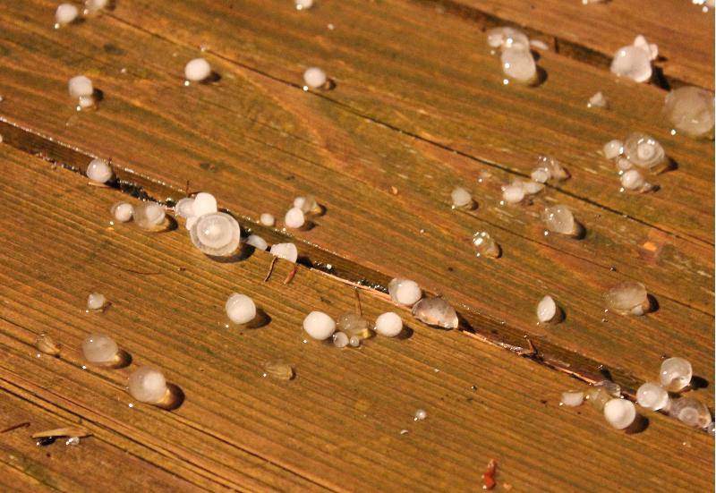 Hail2