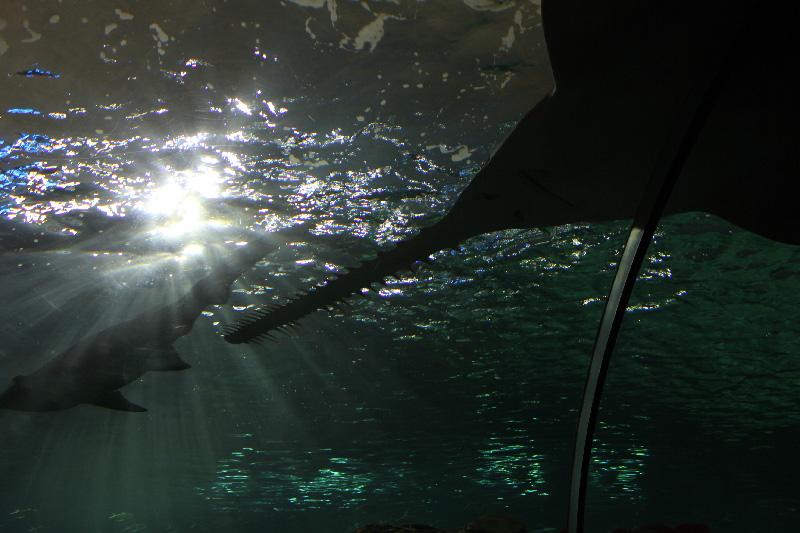 Aqua11